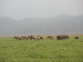 Elephants in Corbett National Park