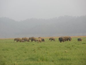 Elephants in Corbett