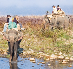 Elephant Safari in Corbett
